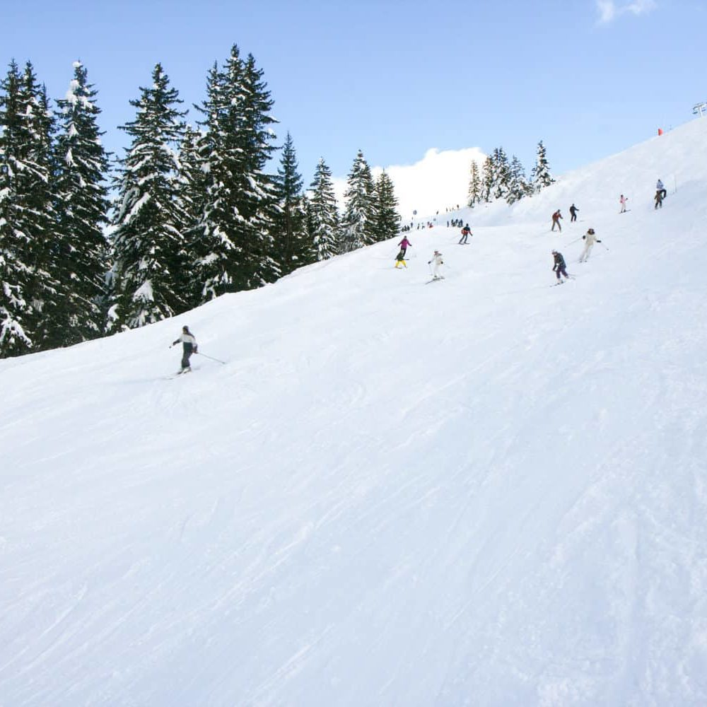 Skiing-piste with trees
